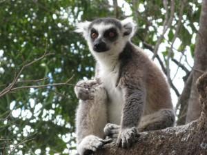 séjour découverte Madagascar