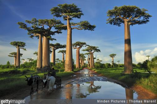 3 bonnes raisons de partir à Madagascar.